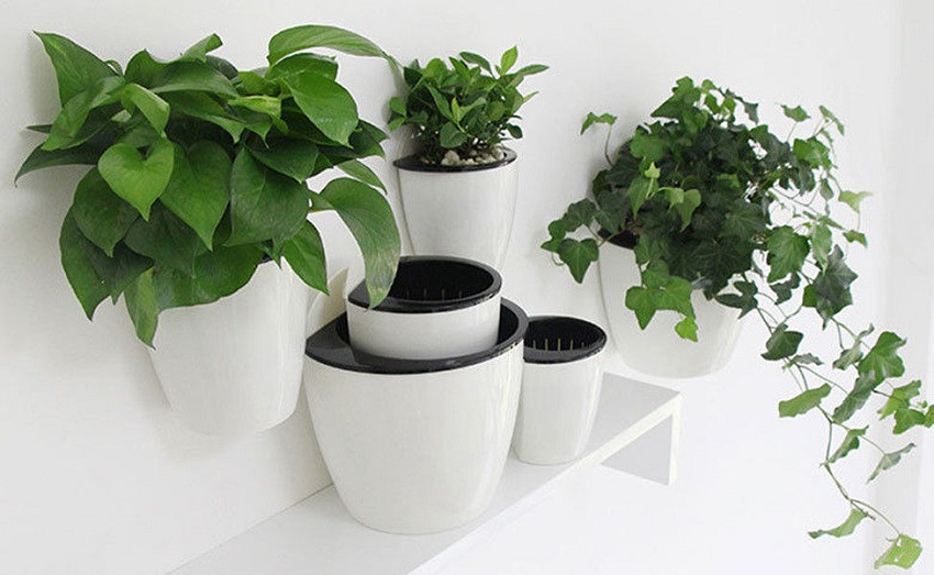 self-watering-pot