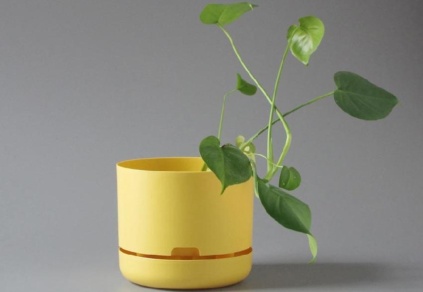 self-watering-pots