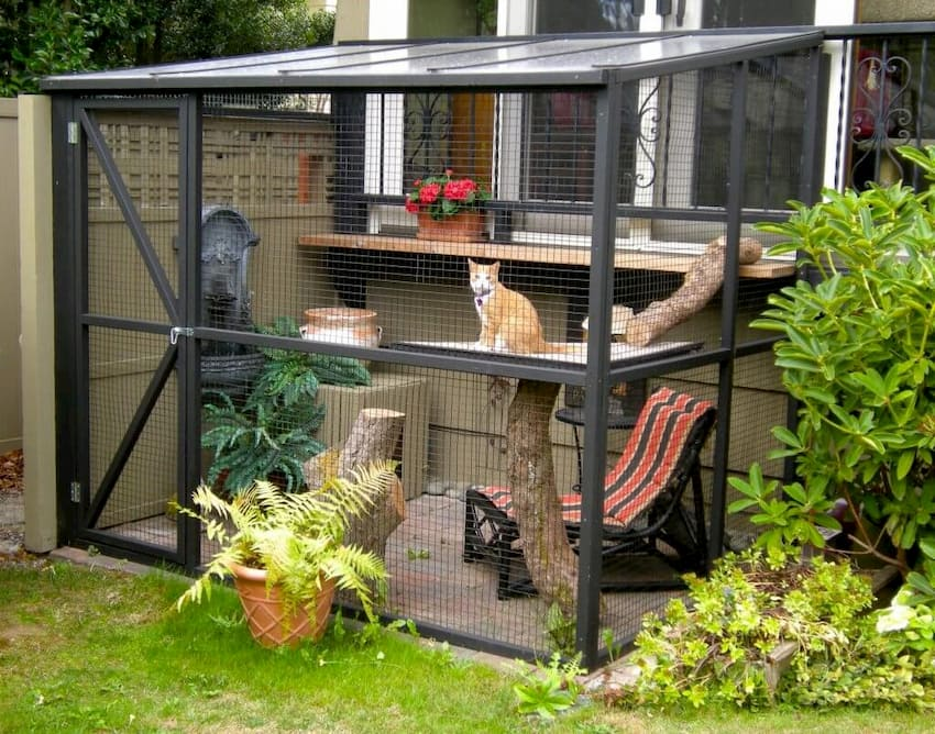 cat inside cat enclosure