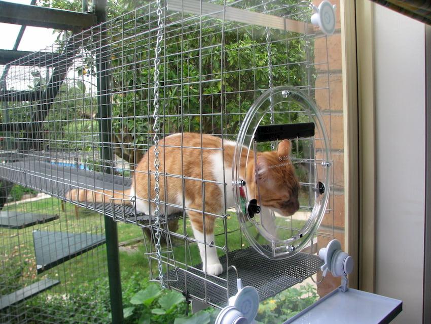 cat inside her enclosure