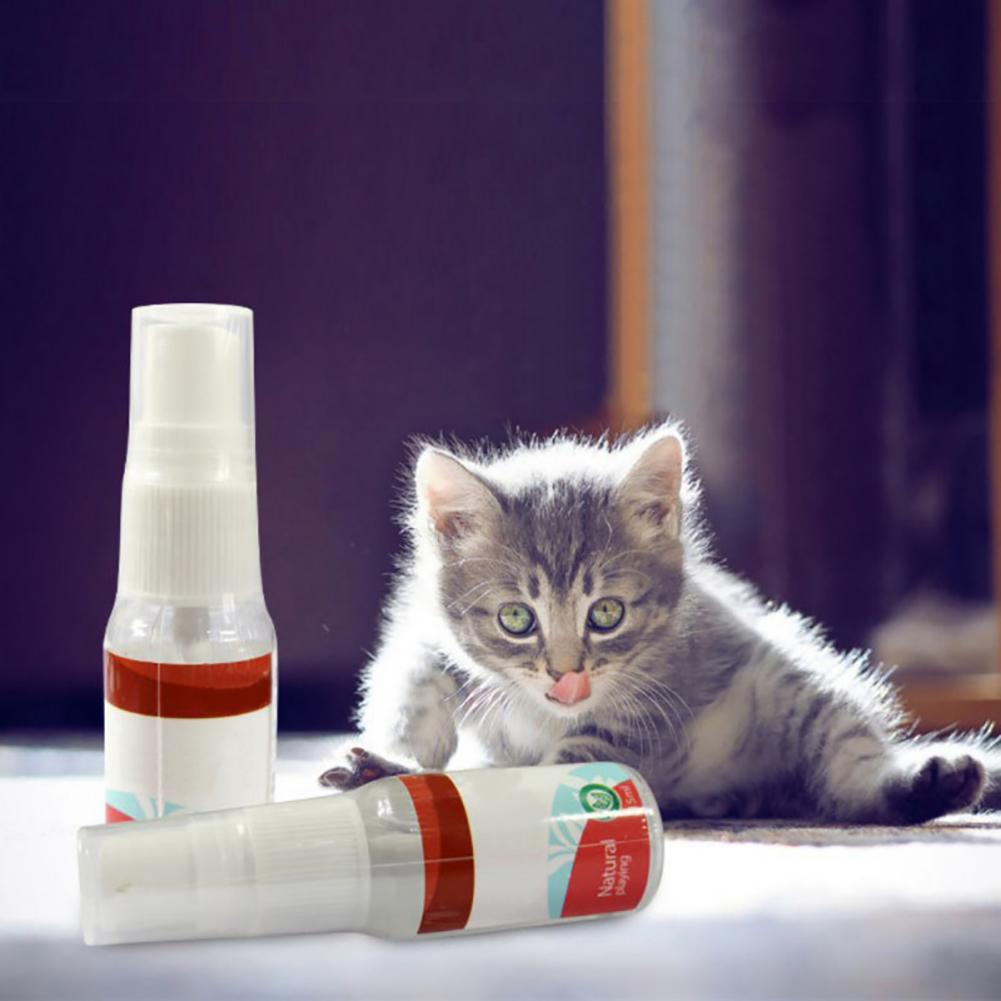 accessories for kittens